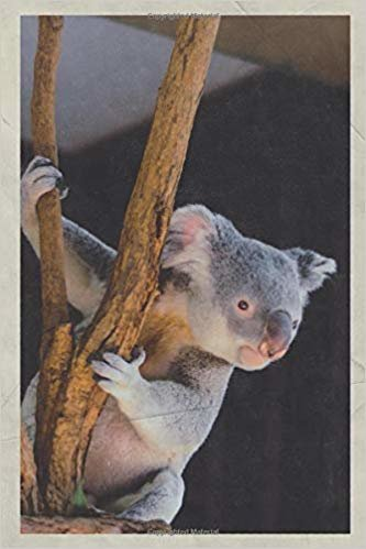 2020: Baby Koala Joey Stylish Planner Calendar Organizer Daily Weekly Monthly Vintage Retro Poster style for Australian animals list and pictures