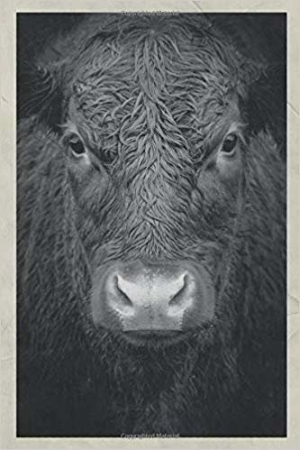 Notebook: Cow body language Useful Composition Book Daily Journal Notepad Diary Vintage Retro Poster style for researching animal communication classes near me
