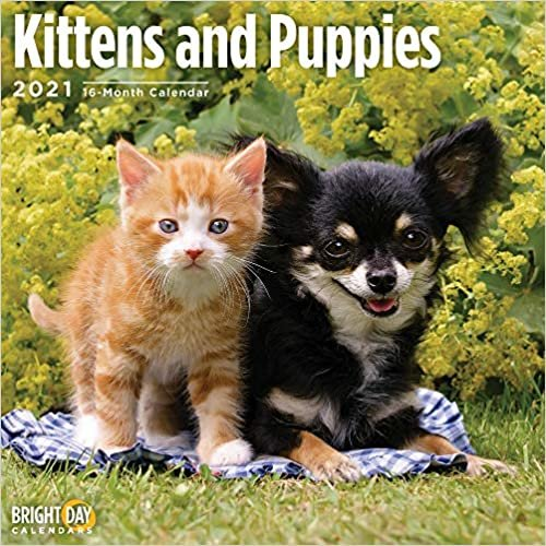 Kittens & Puppies 2021 (Cats)