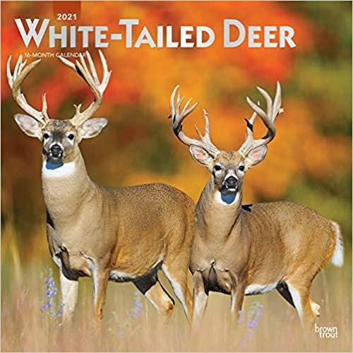 White-tailed Deer - Virginiahirsche 2021 - 16-Monatskalender: Original BrownTrout-Kalender [Mehrsprachig] [Kalender] (Wall-Kalender)