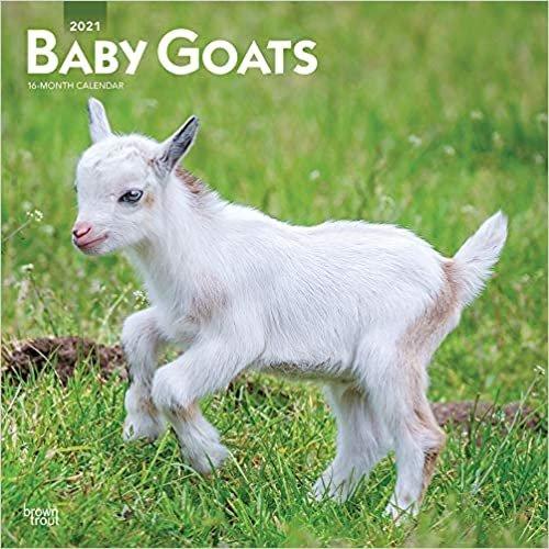 Baby Goats - Ziegenbabys 2021 - 16-Monatskalender: Original BrownTrout-Kalender [Mehrsprachig] [Kalender] (Wall-Kalender)