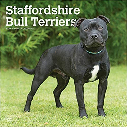 Staffordshire Bull Terriers 2020 Square Wall Calendar