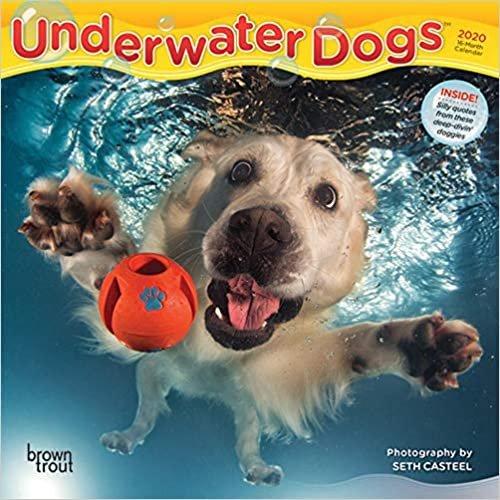 Underwater Dogs 2020 Mini Wall Calendar