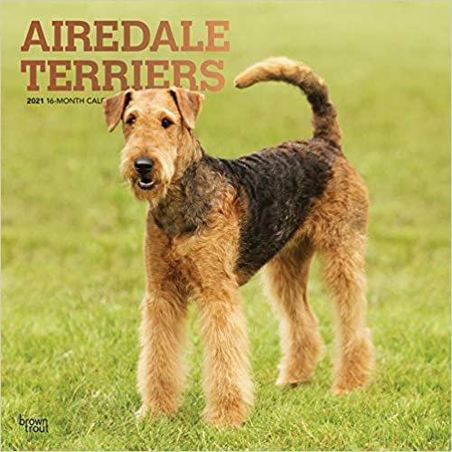 Airedale Terriers 2021 - 16-Monatskalender mit freier DogDays-App: Original BrownTrout-Kalender [Mehrsprachig] [Kalender] (Wall-Kalender)