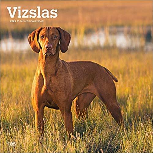 Vizslas - Ungarische Vorstehhunde 2021 - 18-Monatskalender mit freier DogDays-App: Original BrownTrout-Kalender