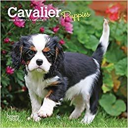 Cavalier King Charles Spaniel Puppies 2020 Mini Wall Calendar