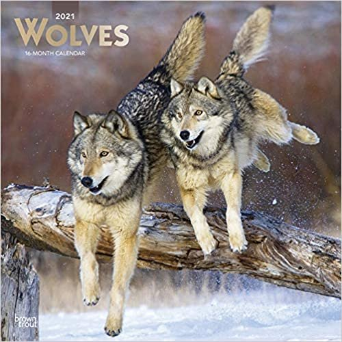Wolves - Wölfe 2021 - 16-Monatskalender: Original BrownTrout-Kalender [Mehrsprachig] [Kalender] (Wall-Kalender)
