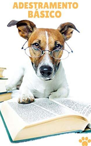 Adestramento Básico - Como treinar seu cão