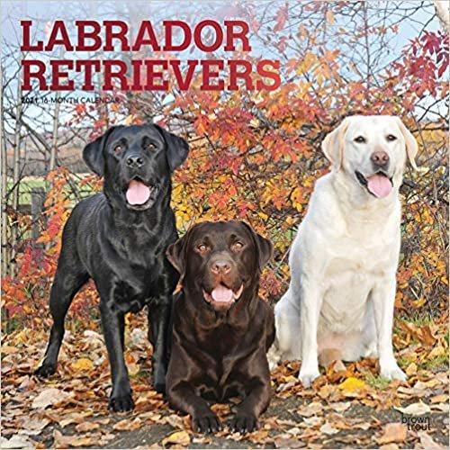 Labrador Retrievers 2021 - 18-Monatskalender: Original BrownTrout-Kalender, mit freier DogDays-App