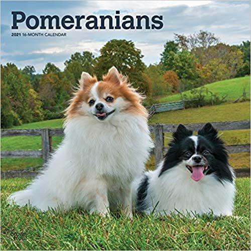 Pomeranians - Zwergspitze 2021 - 18-Monatskalender mit freier DogDays-App: Original BrownTrout-Kalender [Mehrsprachig] [Kalender]