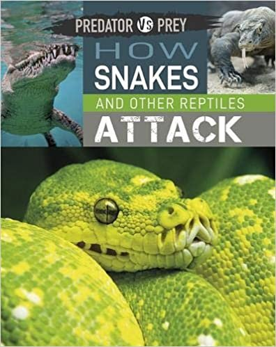 How Snakes and other Reptiles Attack! (Predator vs Prey)