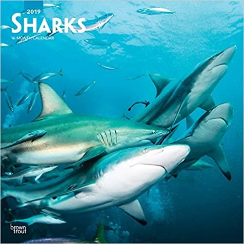 Sharks 2019 Square Wall Calendar