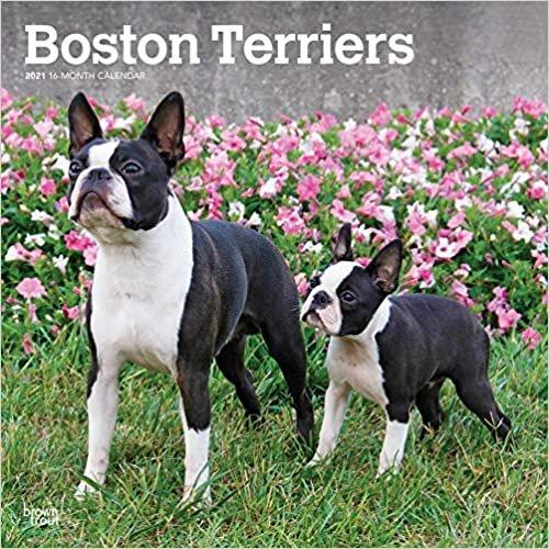 Boston Terriers 2021 - 18-Monatskalender mit freier DogDays-