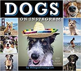 Dogs on Instagram 2020 Calendar