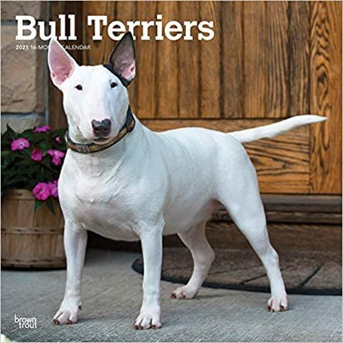 Bull Terriers - Bull Terrier 2021 - 18-Monatskalender mit freier DogDays-App: Original BrownTrout-Kalender [Mehrsprachig] [Kalender]