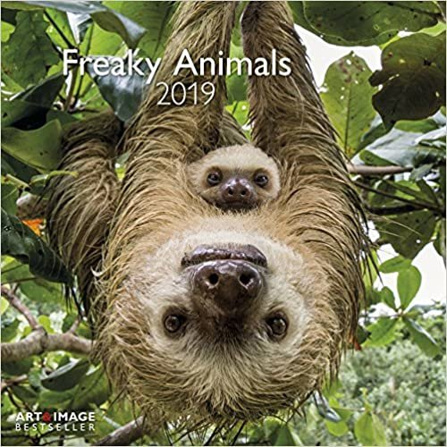 2019 Freaky Animals Calendar - Animal Calendar - 30 x 30 cm
