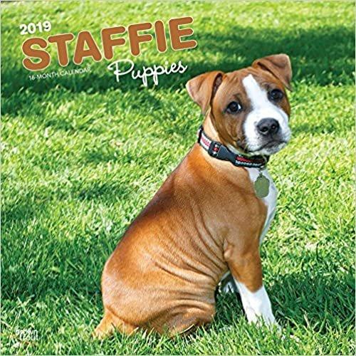 Staffordshire Bull Terrier Puppies - Staffordshire Bull Terrier Welpen 2019 - 18-Monatskalender mit freier DogDays-App (Wall-Kalender)