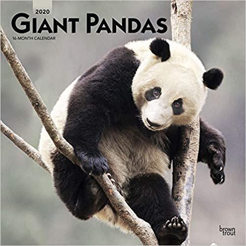 Pandas - Pandabären 2020 - 16-Monatskalender: Original BrownTrout-Kalender [Mehrsprachig] [Kalender] (Wall-Kalender)