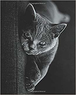 Grey British Short Hair Cat Lovers: Journal Notebook with blank lined pages for British Shorthair Cat Lovers