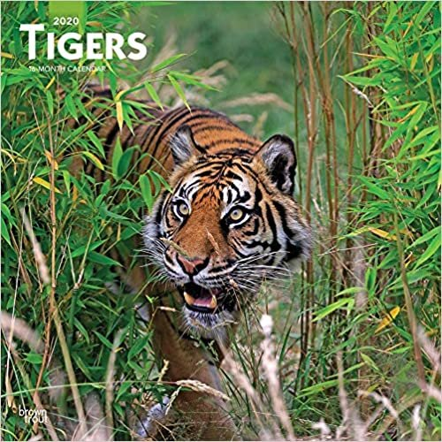 Tigers 2020 Square Wall Calendar