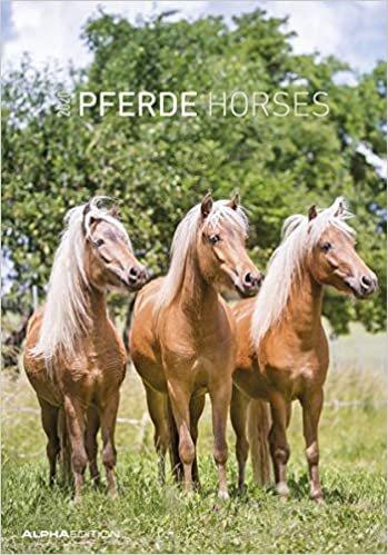 Pferde 2020 - Horses - Bildkalender (24 x 34) - Tierkalender - Wandkalender